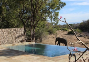 Lodge, Vacation Rental, Listing ID 1496, Thornybush Private Game Reserve, Kruger National Park, South Africa, Africa,